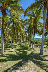 Path through coconut palm trees, Huahine, Society Islands, French Polynesia