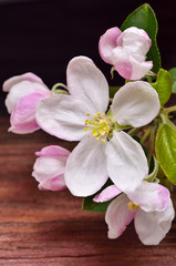 apple flower on a wooden background
