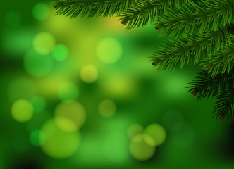Green fir branch background