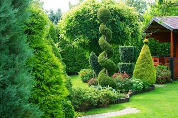 Fototapeta Shorn ornamental plants in a garden obraz