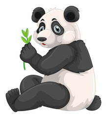 Panda chewing green leaves