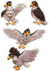 Four eagles in different poses