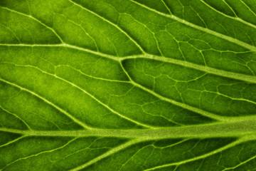 Green leaf / Line leaves the macro.
