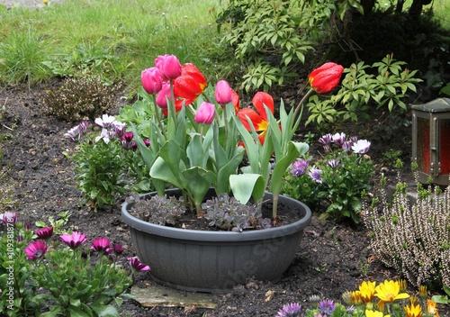 grab im fr hling mit bl henden pflanzen und einer pflanzschale mit tulpen stockfotos und. Black Bedroom Furniture Sets. Home Design Ideas