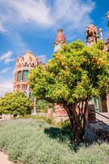 Oranger dans l'Ancien Hôpital de Sant Pau à Barcelone