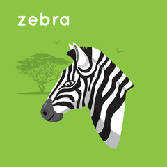 Zebra on green backdrop.