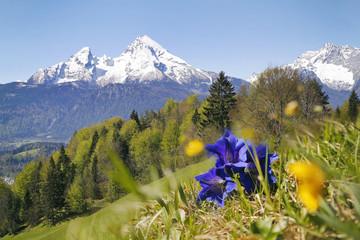 Wall Mural - Wanderung Berchtesgadner Alpen mit Blick auf den Watzmann und Enzian