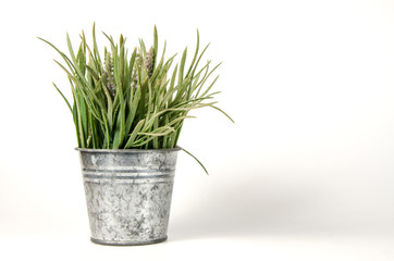 tinplate with plant