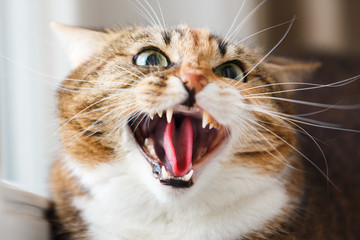 The cat aggression