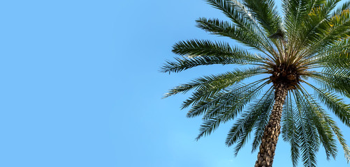 Green palm tree on blue sky background with copy space