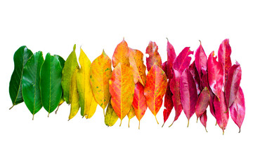 Color leaf. color of nature. Many color autumn leaves.