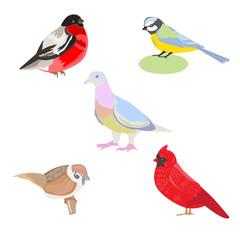 Vector illustration of a set of images of birds, illustration bi