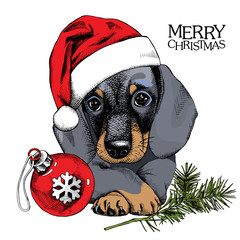 The christmas poster with the portrait of the dog Dachshund in the Santa's hat with ball toy. Vector illustration.