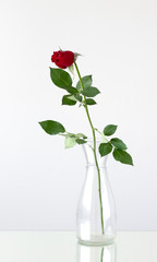 bud of red rose is in a vase