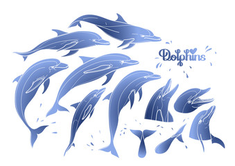 Graphic dolphins collection