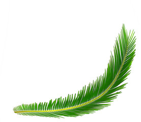 Green leaf of cycads tree background