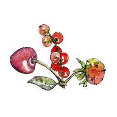 Watercolor botanical illustration of cherries, currants and strawberries