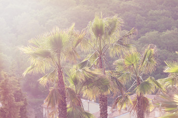 Palm trees at tropical coast. Vintage effect