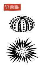 Sea Urchin, vector cartoon illustration