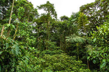 Rainforest in Ecuador Choco