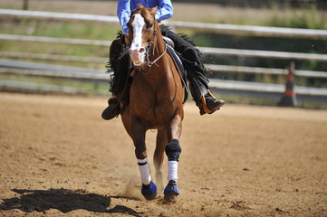 A front view of a rider and horse running ahead