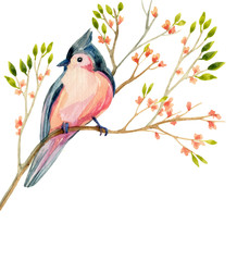 Watercolor bird card: tufted titmouse on a blooming branch.