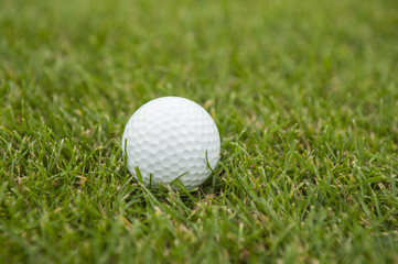 Golf ball in green grass close up