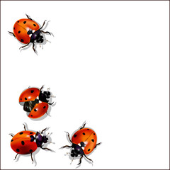 Background, ladybugs on a light background.