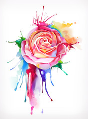 Watercolor painting, rose flower, vector illustration, isolated on a white background