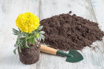 Printed kitchen splashbacks Garden Seedling of flowers. Seedling of flowers, soil, shovel and rake on a light wooden background.