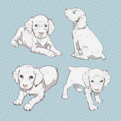 Set of little puppy hand-drawing