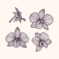 Stylized drawing orchids. Pattern of orchids. Set of vector orchids. Isolated orchids on a light background
