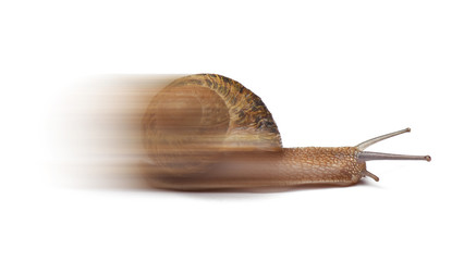 Speed snail isolated on white background