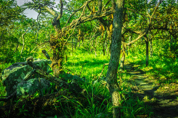 tropical evergreen forest