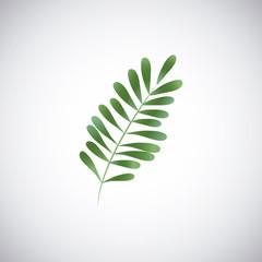 Tropical leaves design. leaf icon. natural concept, vector illustration