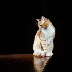Ginger ginger tabby cat on a table