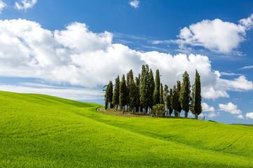 Obraz Piękny krajobraz w Toskanii we Włoszech - fototapety do salonu