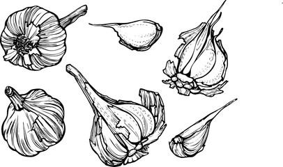 set of garlic