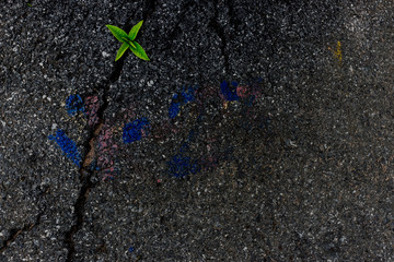 Trees on the asphalt.