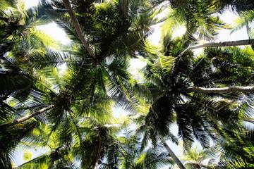 Low angle view of palm trees, Maho Bay, St.John, US Virgin Islands