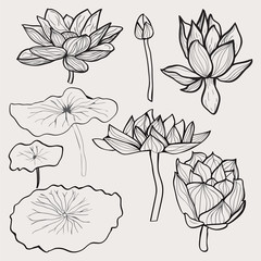 Beautiful monochrome hand drawn lotus flowers and leaves.
