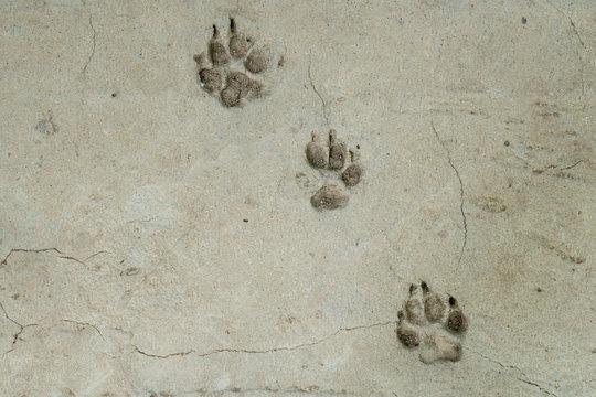 Dog foot print