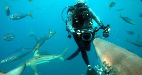 Scuba diver capturing shark