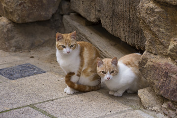 A pair of young beautiful cats sitting on the street of a villag