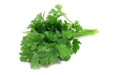 sheaf of green fresh coriander on a white background