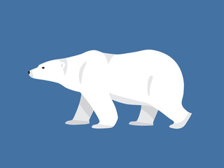 Polar bear hand drawn illustration, flat style
