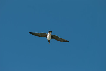 The bird flying in the blue sky