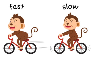 Opposite words fast and slow vector