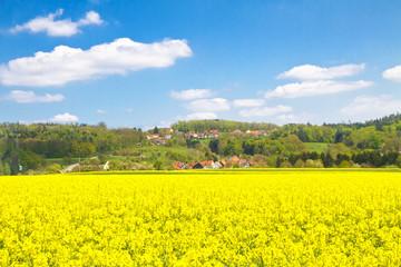 Wall Mural - Landschaft mit Rapsfeld und Dorf in Baden Württemberg - Nähe Welzheim