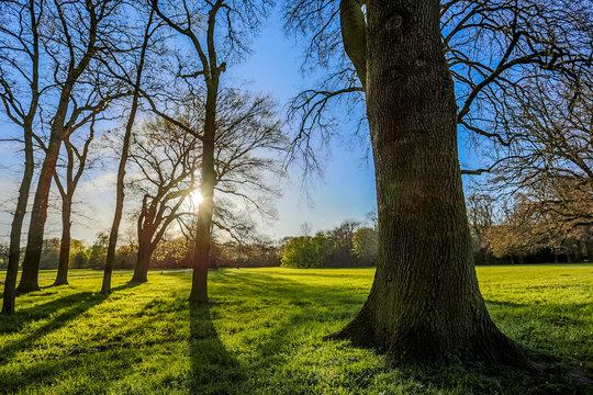 Untergehende Sonne im Bürgerpark von Bremen